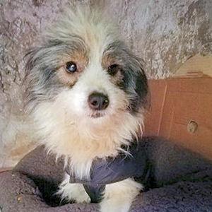 Kleiner Hund aus Tierschutz in Rumänien sucht ein neues Zuhause.