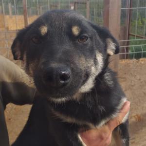Hunde aus dem Tierschutz suchen ein Zuhause